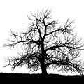 Abstract Bw Single Tree by Mike Loudermilk