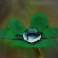 Abstract Clover by Kym Clarke