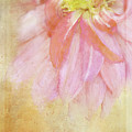 Abstract Dahlia In Pink by Terry Davis