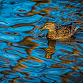 Abstract Duck by David Downs