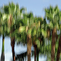 Abstract Florida Royal Palm Trees by Juergen Roth