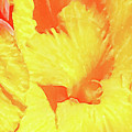 Abstract Flower by Nat Air Craft
