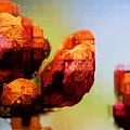 Abstract Flowers by Agusta Gudrun  Olafsdottir