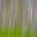 Abstract Forest 2 by Whispering Peaks Photography