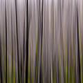 Abstract Forest by Whispering Peaks Photography
