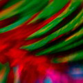 Abstract Frolic by Gwyn Newcombe
