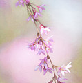 Abstract Higan Chery Blossom Branch by Anita Pollak