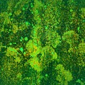 Abstract Image In Green, Evoking The Dream And Bringing The Mind To Stimulate by Airo Zamoner