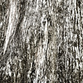 Abstract Monochrome Bark by Marilyn Hunt