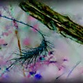 Abstract Nature by April Cook