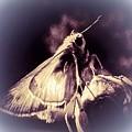 Abstract Of Skipper Butterfly by Debra Lynch