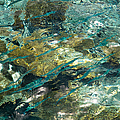 Abstract Of The Underwater World. Production By Nature by Jenny Rainbow