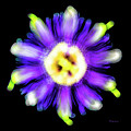Abstract Passion Flower In Violet Blue And Green 002a by Ricardos Creations