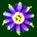 Abstract Passion Flower In Violet Blue And Green 002g by Ricardos Creations