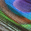 Abstract Peacock Feather by Angela Murdock