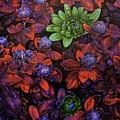 Abstract Purple Flowers by Nikos Zarras