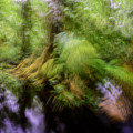 Abstract Rain Forest by Myer Bornstein