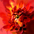 Abstract Red Chrysanthemum by Elaine Plesser