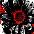 Abstract Red White And Black Daisy by Angelina Vick