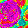 Blooming Roses Abstract by Karen J Shine