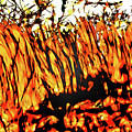 Abstract Saw Grass Iv by Gina O'Brien