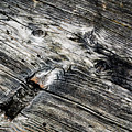 Abstract Shapes On An Old Weathered Wooden Board by Jozef Jankola