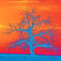 Abstract Single Tree Blue-orange by Mike Loudermilk