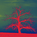 Abstract Single Tree Red-blue-green by Mike Loudermilk