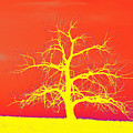 Abstract Single Tree Yellow-orange by Mike Loudermilk