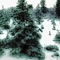Abstract Snowy Trees Lighter by Heather Joyce Morrill