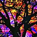 Abstract Tree 304 by Kristalin Davis