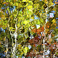 Abstract Tree Reflection by Christina Rollo