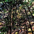 Abstract Trees 691 by Kristalin Davis