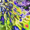 Abstract Wildflower 5 by Belinda Cox