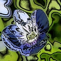 Abstract Wildflower by Belinda Cox