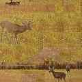 Abstract With White Tailed Deer by rd Erickson