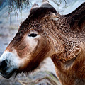 Abstract Wooly Horse by Dennis Dame