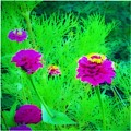 Abstract Zinnias In Green And Pink by Debra Lynch