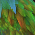 Abstractions From Nature - Pigeon Feathers by Mitch Spence