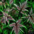 Abundance Of Ferns by Heidi Fickinger