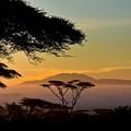 Acacia Land by Remy Simon