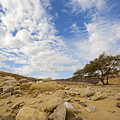 Acacia Tree In The Desert by Alon Meir