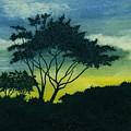Acacia Tree by Michael Vigliotti