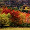 Acadia Colors by Linda Cullivan