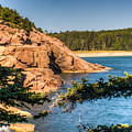 Acadia National Park Rocky Shoreline by Douglas Barnett