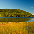 Acadia, National Park Shoreline And Marsh Maine by Douglas Barnett