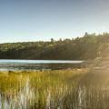 Acadia National Park Shoreline In Evening Sun by Douglas Barnett