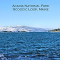 Acadia Titled by Debbie Stahre