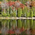 Acadia Tree Reflections by Alexander Mendoza