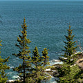 Acadia's Atlantic by Skip Willits